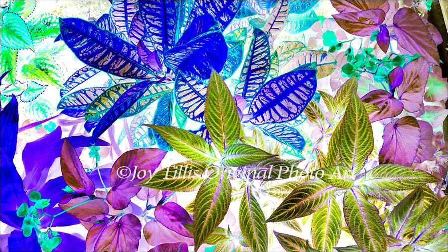 Flowers In A Fairy Tale