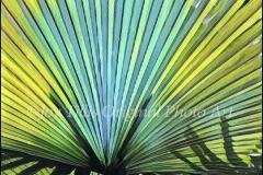 Aqua Palm Fan