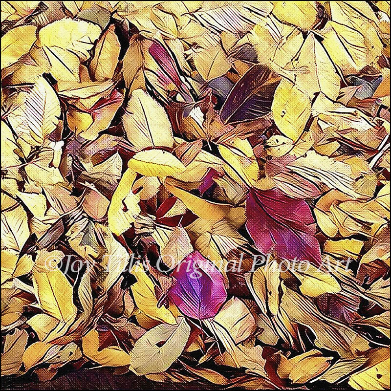Seasons: Fall Leaves